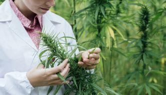 PJLA Medical Marijuana Testing